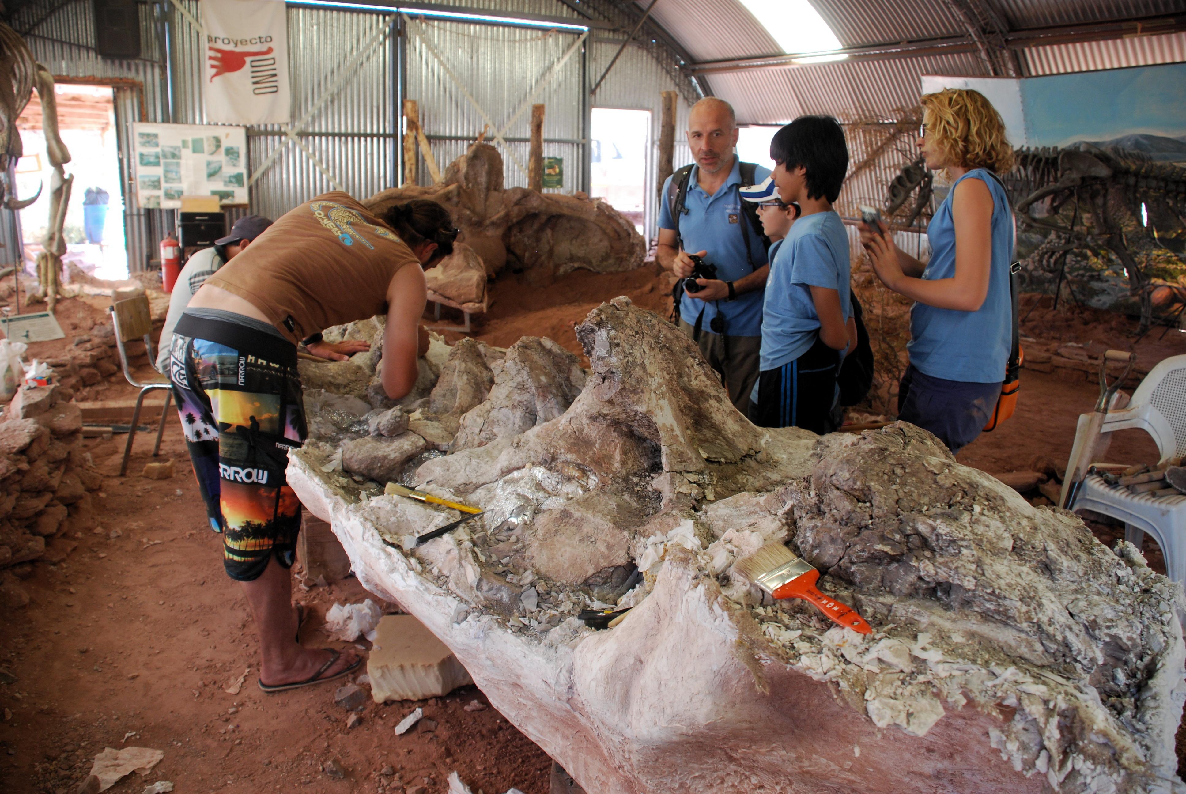 I resti di Futalognkosauro nel laboratorio del lago Barreales