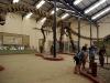 La replica di Argentinosauro al museo di Plaza Huincul