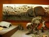 """Resti di Gliptodonte conservati al Museo \""""Bernardino Rivadavia\"""" di Buenos Aires"""